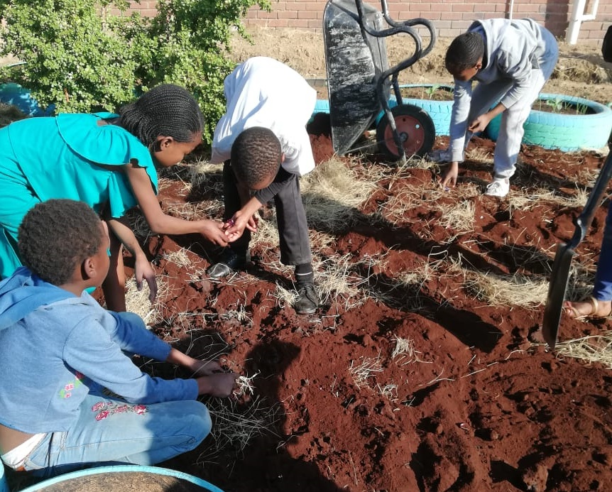 Roots & Shoots kids working in food garden